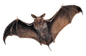 Bats in your loft conversion.
